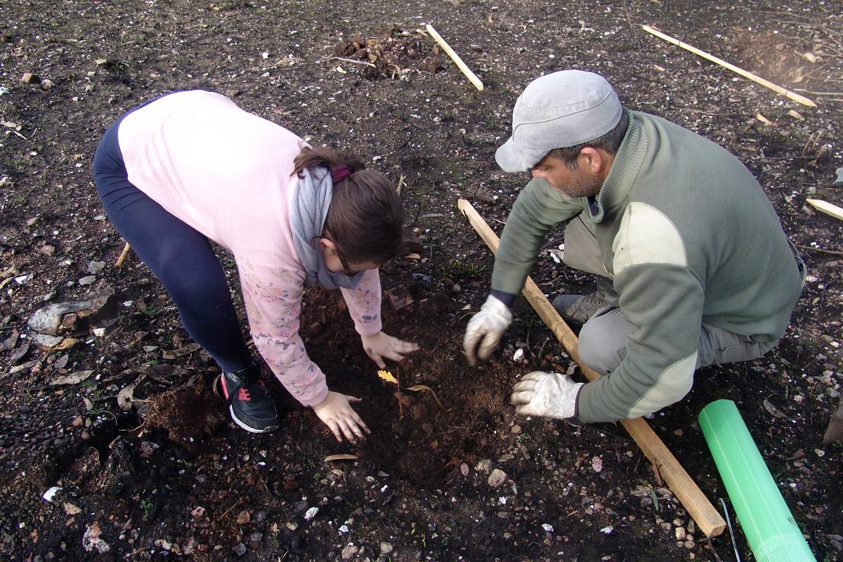 Ação de plantação de espécies nativas
