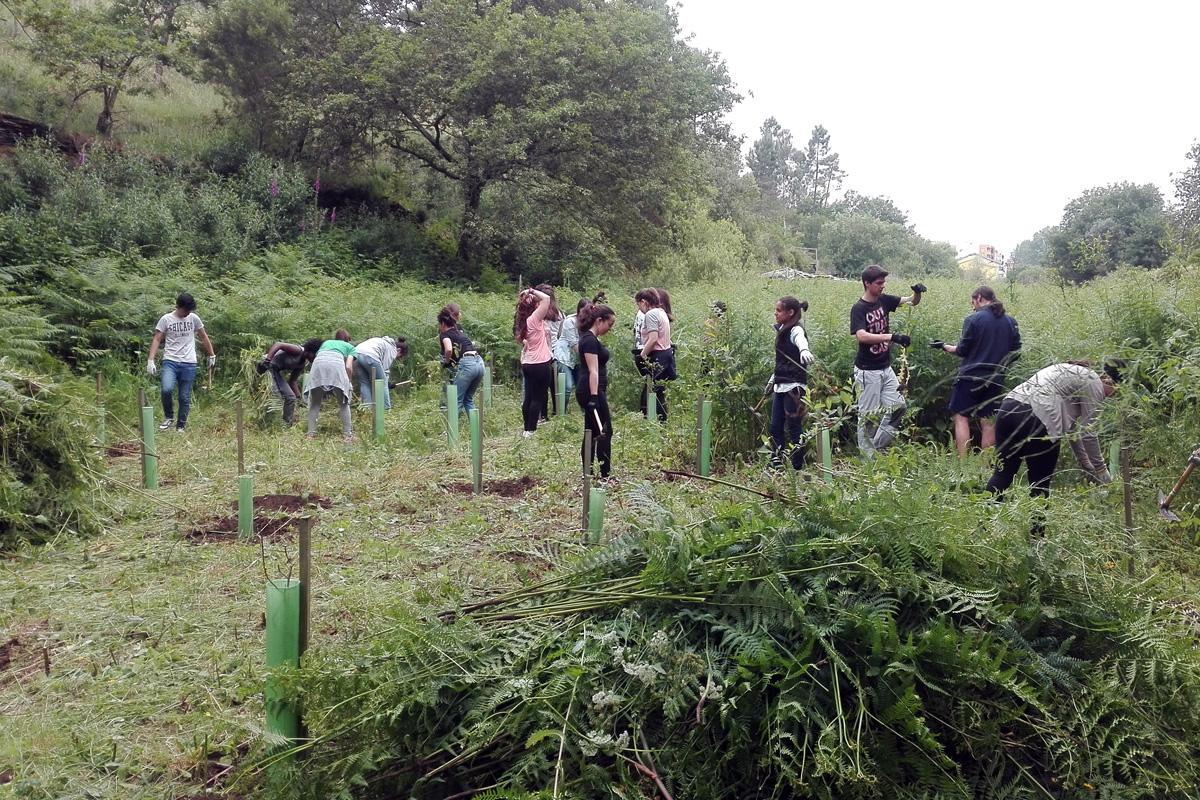 Ação de manutenção florestal - projeto FUTURO