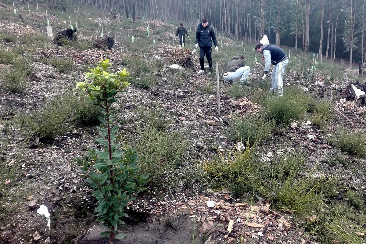 Voluntariado florestal - projeto FUTURO