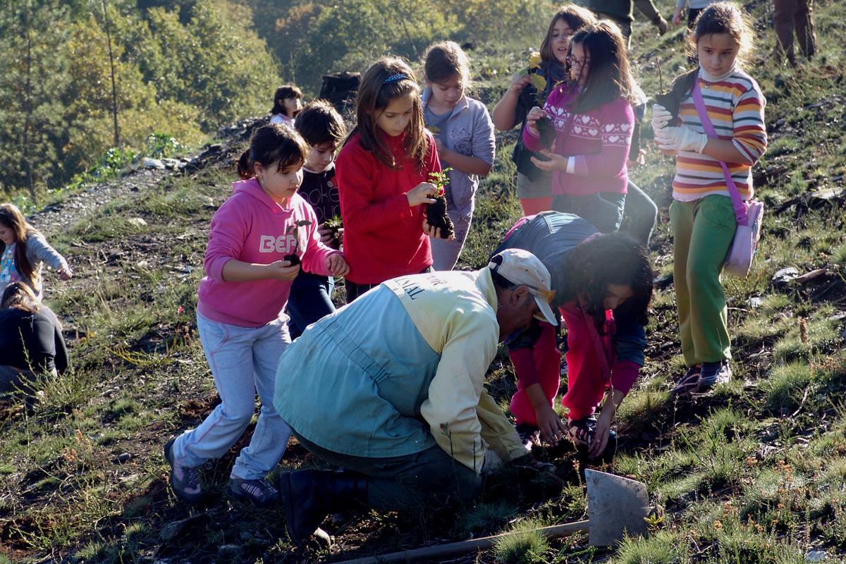 Plantação de árvores com alunos